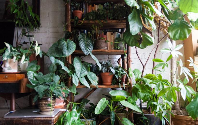 النباتات شقة