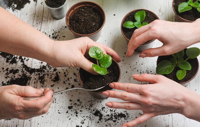 ما هو الأسمدة النباتية