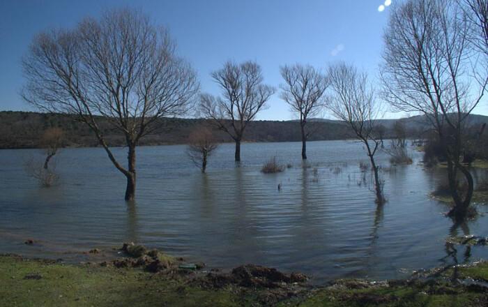 أشجار كبيرة داخل البحيرة