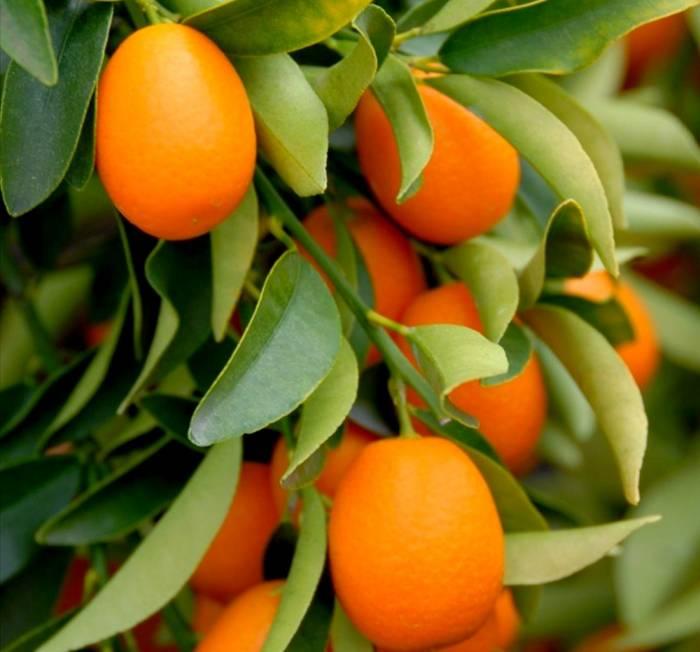 برتقال برتقالي