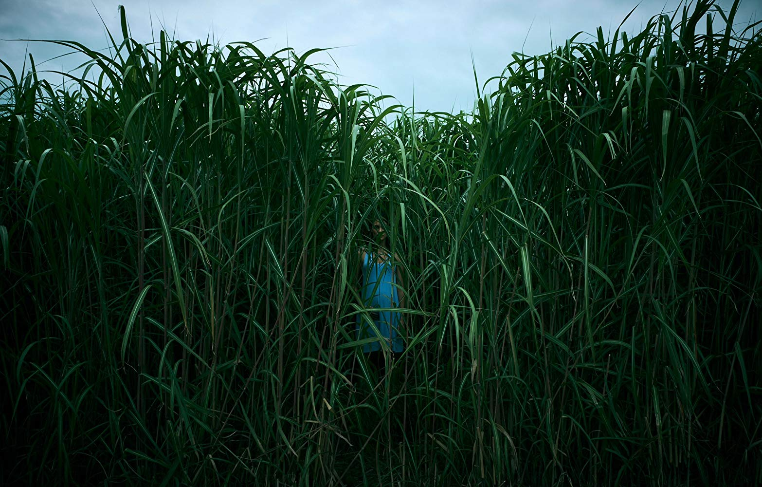 على العشب الطويل