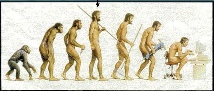 عدم التوافق التطوري