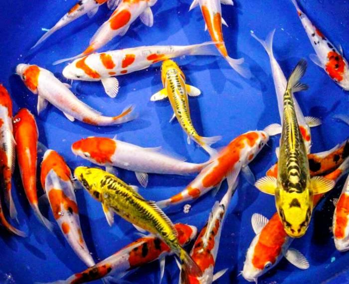جميع أنواع الأسماك