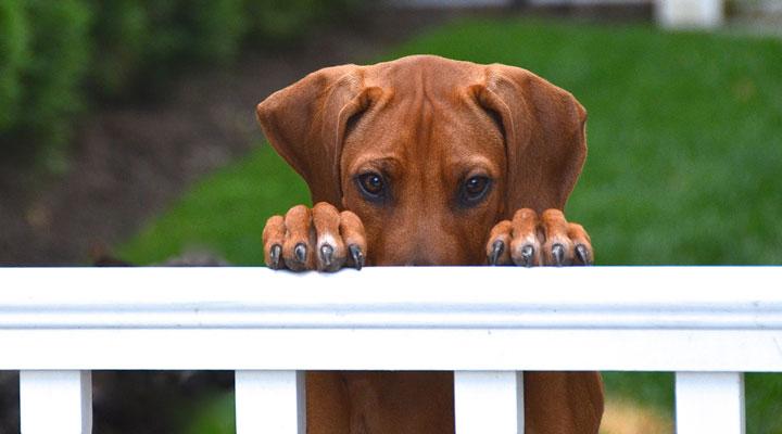 الخوف من الكلاب - تجنب