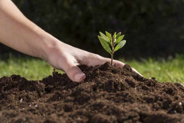 تغذية التربة