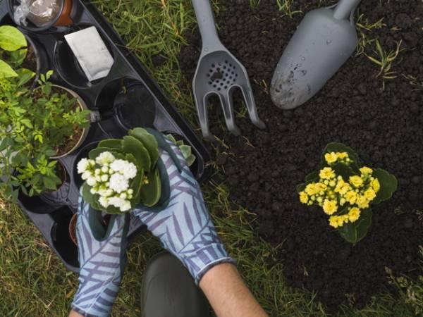 تغذية الأواني وتربة الحديقة