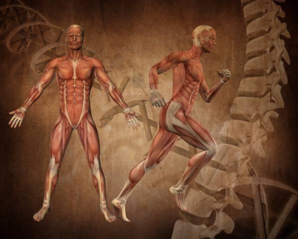 زيادة قوة العضلات والعضلات