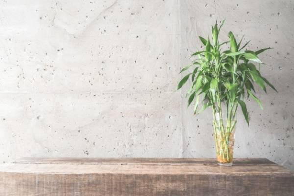 حياة نبات الخيزران