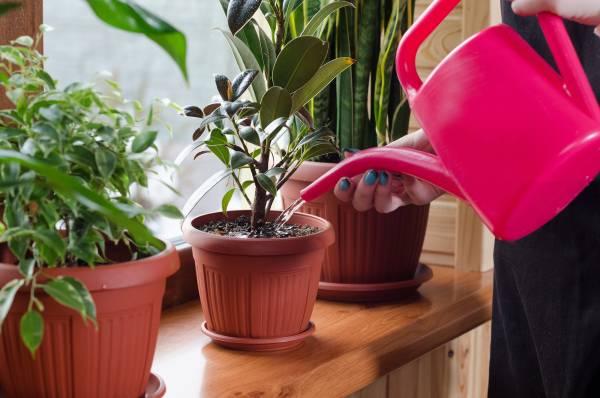 أكثر النباتات المنزلية دواما