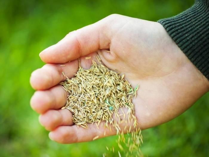 طريقة تطهير البذور