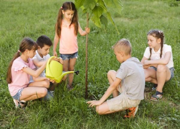 زرع شجرة
