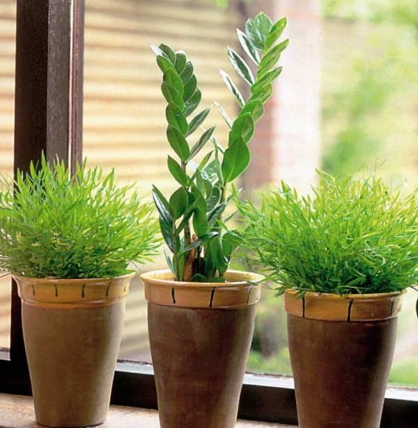 منعش النباتات الذابلة