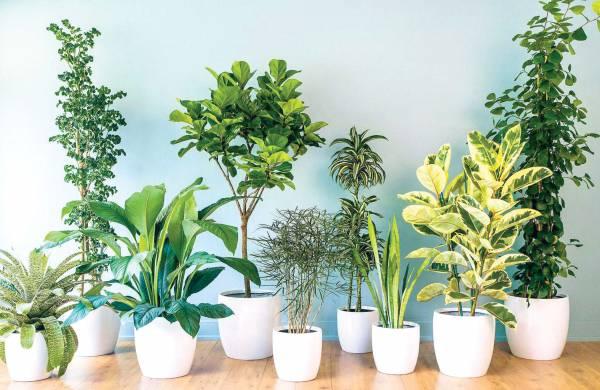 طريقة إحياء نبات ذابل