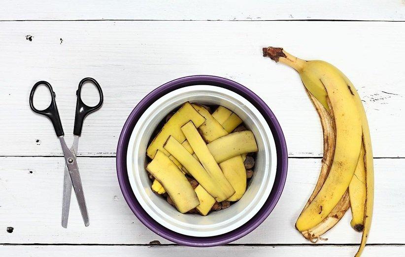 قشر الموز في البستنة