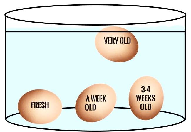 كشف عمر البيض