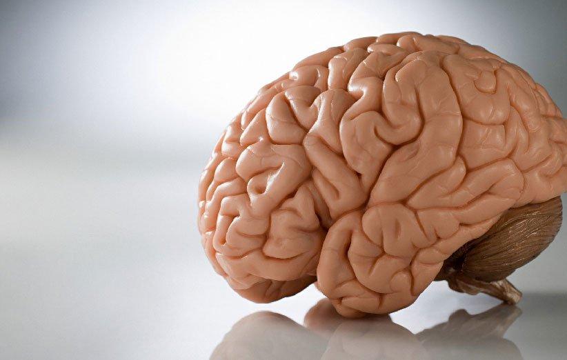 يعزز صحة الدماغ من خصائص السلمون