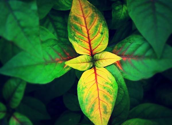 سبب اصفرار النباتات