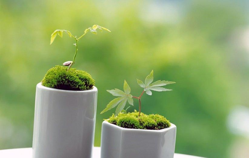 متى تزرع الخضرة للنوروز