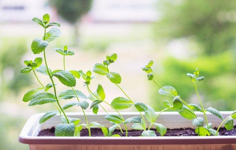 1620643824 338 18 نباتًا رائعًا يعزز الطاقة الإيجابية في منزلك أكو وب