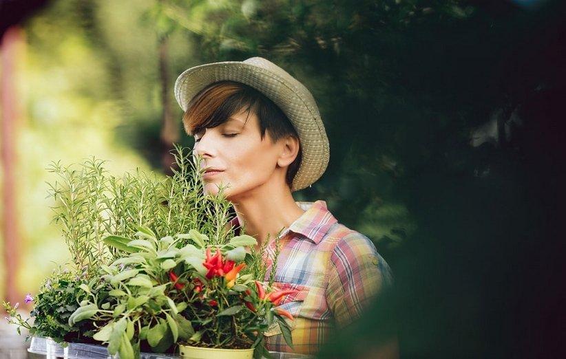 1620643824 375 18 نباتًا رائعًا يعزز الطاقة الإيجابية في منزلك أكو وب
