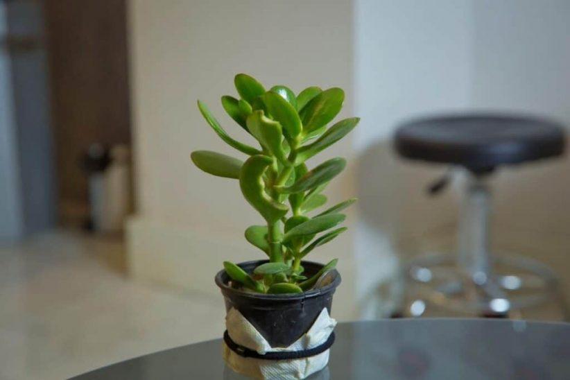 1620643824 379 18 نباتًا رائعًا يعزز الطاقة الإيجابية في منزلك أكو وب