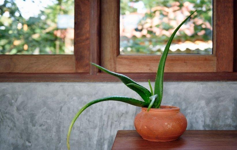 1620643824 483 18 نباتًا رائعًا يعزز الطاقة الإيجابية في منزلك أكو وب