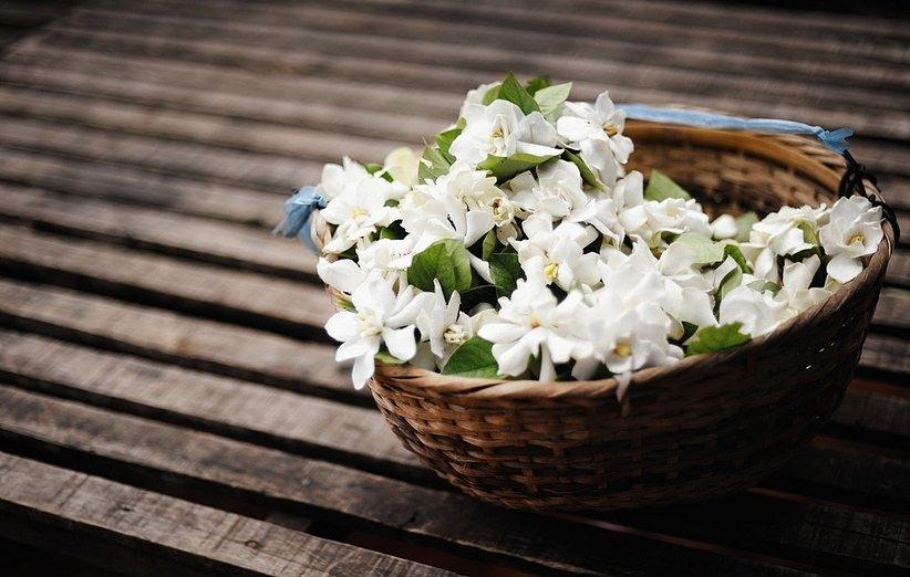 1620643824 495 18 نباتًا رائعًا يعزز الطاقة الإيجابية في منزلك أكو وب