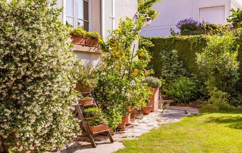 1620643825 550 18 نباتًا رائعًا يعزز الطاقة الإيجابية في منزلك أكو وب