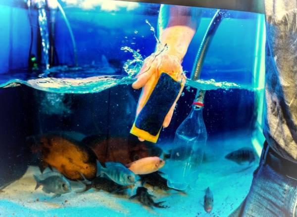 حوض السمك النظيف