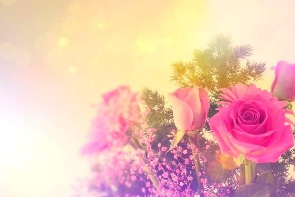 زراعة الورود محلية الصنع