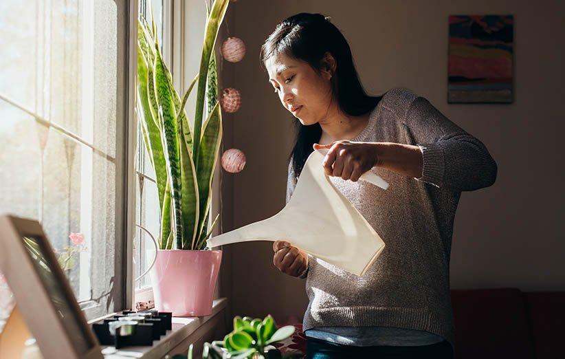 فوائد الحفاظ على الزهور والنباتات