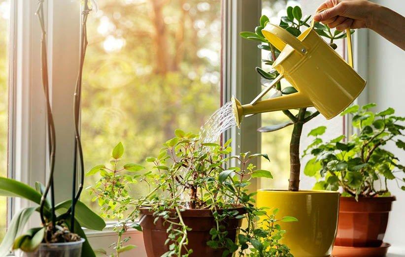 فوائد حفظ الزهور والنباتات في المنزل