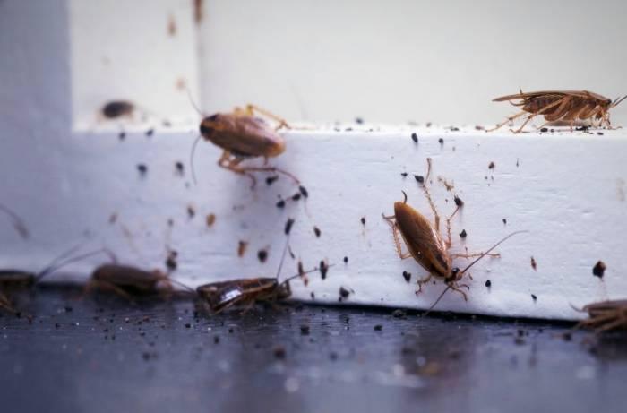 حشرات في المنزل