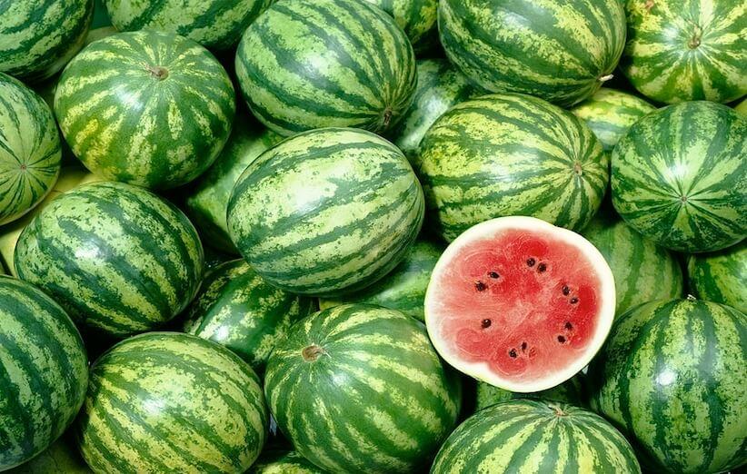 تعرف على المزيد حول خصائص البطيخ - البطيخ