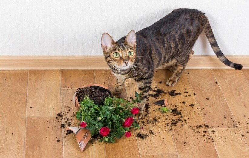 الحيوانات الأليفة واللعب بالنباتات