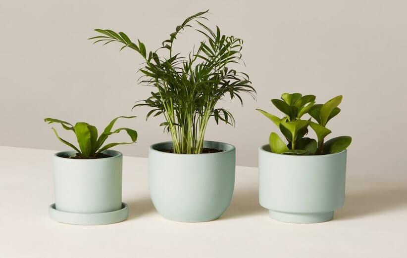 نباتات منزلية غير سامة