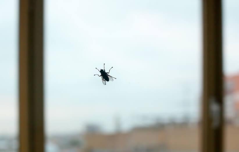 البعوض والذباب - الذباب الهارب