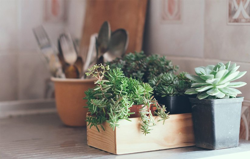 نباتات منزلية مناسبة للمطبخ