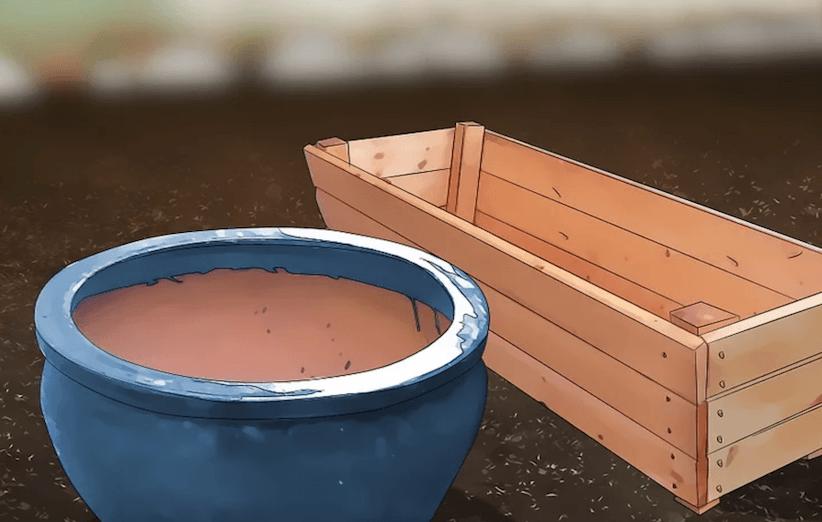 المرحلة الأولى من زراعة السبانخ: تحضير الوعاء